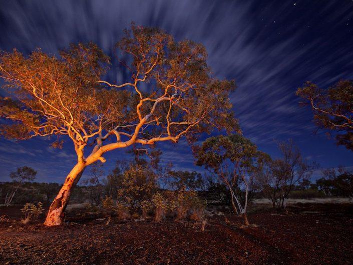 Karinjini Tree
